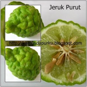https://melacakalam.files.wordpress.com/2011/10/jerukpurut.jpg?w=300