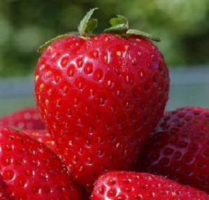 Fakta dan manfaat buah Strawberry